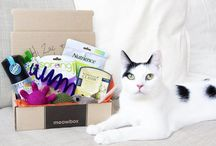 Gifts for Cats / Sure, cats act cool, but who doesn't get excited about a new catnip toy, a tasty treat, or a comfy new pet bed? Find the perfect gift for your finicky feline here!