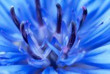 Floral Waters - Eaux florales