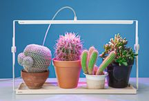 Prickly, spicky, colourful things
