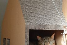 Ideer for katter