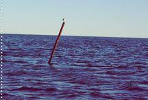 H A V E T / Havet, staker, merker og fyrlykter...