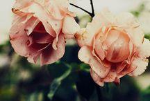 ~Spring~Summer~Soft & Lovely~