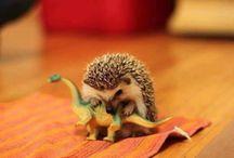 I want a pet hedgehog / by Dani Thew