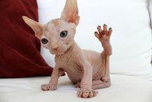 Alien cat! It is a very cute little cat!