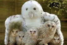 I Love Owls!! / Beautiful Owls