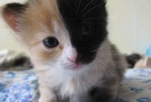 Cats / Pictures of furry feline friends