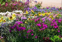 צמחים ועציצים פורחים לגינה / צמחים ועציצים פורחים לגינה