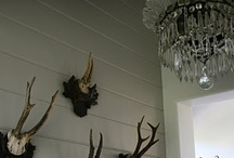Antlers & Horns in decor. / by Christine Hyder