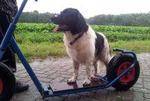 Binke / Mijn hond