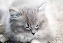 Lovely kittens  / They are so beautiful, sweet and soft!
