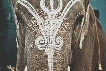 Éléphants peints