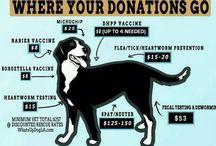 animal rescue idea