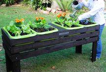 raised plant boxes