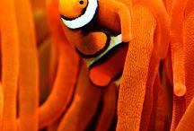 Color me ... Orange crush / All shades of orange