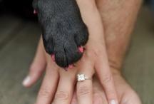 Katie's engagement photos! / by Kristen Winter