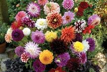 Flower Garden / by Amanda Pignotti