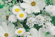 Kompozycje kwiatowe