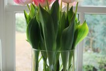Tulips in a glass container