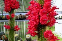 сукуленты и кактусы