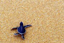 Turtles n tortoises / Reptiles