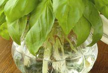 Indoor organic edible garden / by Lori Davila