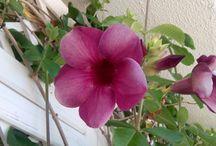Mis fotos de flores... ♥