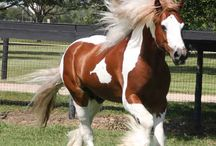 paint horses / This board is about my fav horse! The paint horse I Love Them!!!!!!!!!!