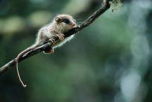Marsupial / Alforja impermeable para bicicleta