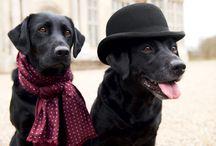 Doggies / by Jessica Crump
