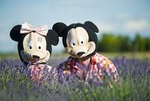 in lavenders