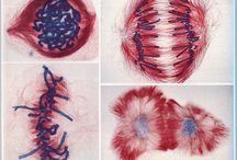 Biology / So fascinating