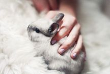 Rabbits ❤