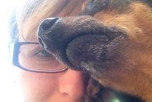 Pino / My lovely...beautiful...small dog
