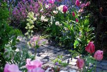 Blütenmeer im Garten