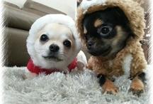 Lee Jun Ki dogs