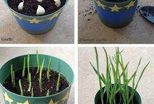 DIY & Garden