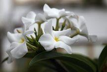 Flowers & plants free stock photos