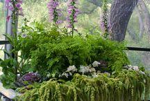 succulents / by Kim Perry Ornduff