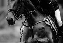 Equitación / Show Jumping