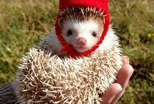 Hedgehog stuff