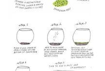 DIY glass bowl garden ( terrarium)