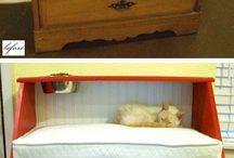 Till katterna