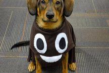 Costumes Magou le petit chien à Coco