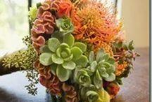 Succulent wedding ideas / Piantine succulenti per il tuo Matrimonio