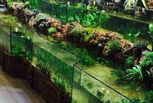 Acuario / Aquarium