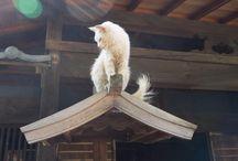 カッチョエ~お猫様