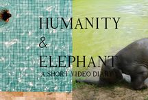 CHARITY / INDIEGOGO CAMPAIGN THE FIRST ONE IS A SHORT VIDEO DIARY ABOUT A HUMAN AND AN OLD THAI ELEPHANT, TO LET PEOPLE SEE ANOTHER PERSPECTIVE OF LIVES