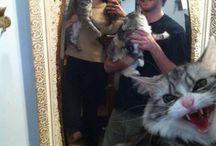Cats, I love Cats