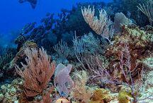 Mexico's National Marine Parks