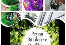 Çiçek& ağaç / Çiçek